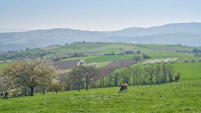 """Savigny et sa région. Randonnée - 45°48'26"""" N 4°33'8"""" E - 455,8m (Savigny - Auvergne-Rhône-Alpes)"""