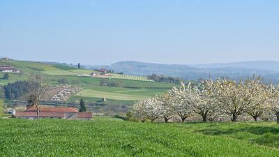 """Savigny et sa région. Randonnée - 45°48'21"""" N 4°33'26"""" E - 418,0m (Savigny - Auvergne-Rhône-Alpes)"""