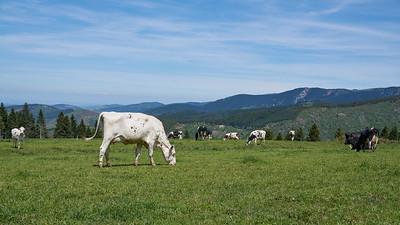 "Rochetaillée Gouffre d'Enfer - Randonnée - 45°23'1"" N 4°29'22"" E - 1090,1m (Tarentaise - Auvergne-Rhône-Alpes)"