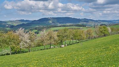 """Cublize / Ronno randonnée avril 2017 - 45°59'32"""" N 4°23'1"""" E - 564,6m (Ronno - Auvergne-Rhône-Alpes)"""
