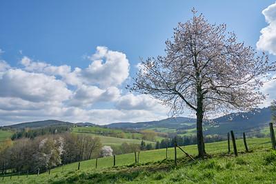 """Cublize / Ronno randonnée avril 2017 - 45°59'58"""" N 4°22'29"""" E - 483,9m (Ronno - Auvergne-Rhône-Alpes)"""