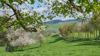 """Cublize / Ronno randonnée avril 2017 - 45°59'32"""" N 4°22'58"""" E - 562,3m (Ronno - Auvergne-Rhône-Alpes)"""