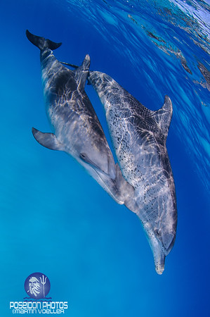 Pair of Dolphins