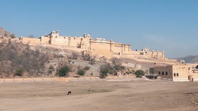 Vue du fort d'Amber sur sa colline depuis la vallée. Le nom d'Amber est mentionné pour la 1ère fois par Ptolémée. Fondée par la tribu des Minas, elle est prise, en 1037, par les Rajputs Kachhwâhâ, qui en font leur capitale jusqu'à ce qu'ils l'abandonnent au profit de Jaipur, une ville moderne construite, en 1727, sur un plan à damier par le mahârâja Jai Singh II, à une dizaine de kilomètres. L'influence moghole est évidente dans les pavillons ouverts et les jardins emménagés avec canaux et fontaines. Les cours sont entourées de luxueux palais, de halls d'audience et d'appartements privés décorés de miroirs et de mosaïques. Sur le bas de la photo, on imaginera le bassin rempli d'eau en saison de mousson pour le bonheur des éléphants qui pourront s'y baigner !