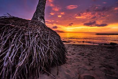 Laniakea, Hale'iwa, O'ahu, Hawaii