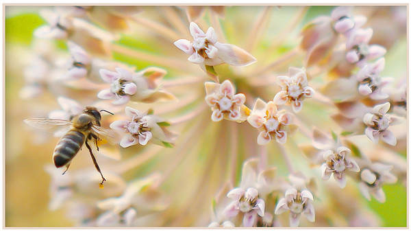 Bee Explosion