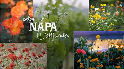 Colors of Spring in Napa