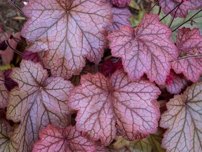 Allen_G9_Floral_Pink Ivy P1215035