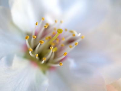 Allen_G9_Floral_DelicateP1085782