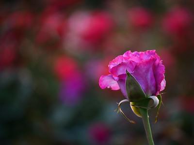 Allen_G9_Floral_Standout P1154212