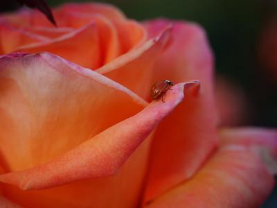 Allen_G9_Floral_CruisinLady P1154106