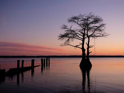 Allen_G9_Travel_TwinTree sunset_1001098