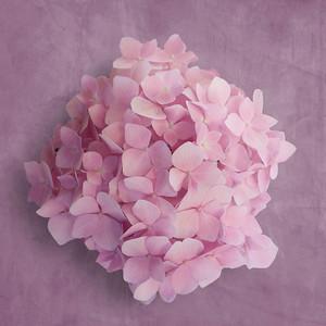 Allen_GH5_Floral_ Pink Hydrangea2