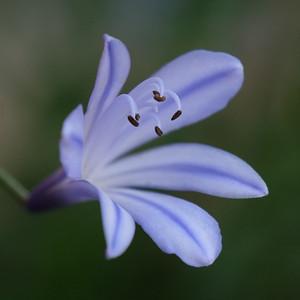 Allen_GH5_Floral_Lillybell
