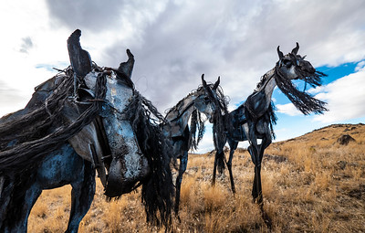 Allen_GH5_Travel_Bleu Horses 9382 LP