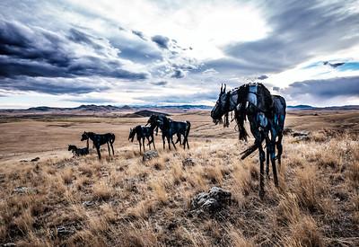 Allen_GH5_Travel_Bleu Horses 9352