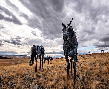 Allen_GH5_Travel_Bleu Horses 9252 new