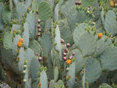 Cacti P9990194 sooc