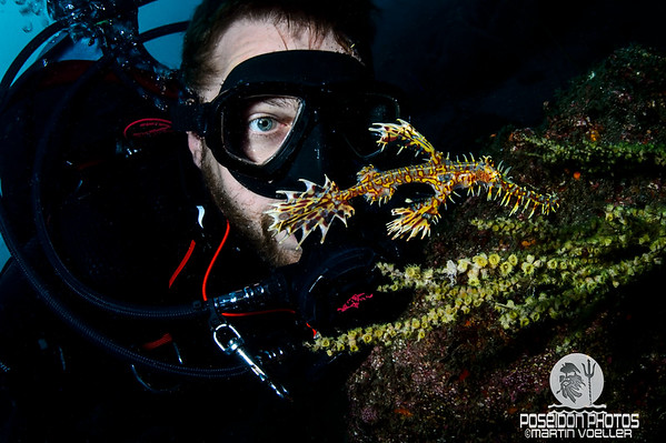 Ornate Ghost Pipefish and Diver