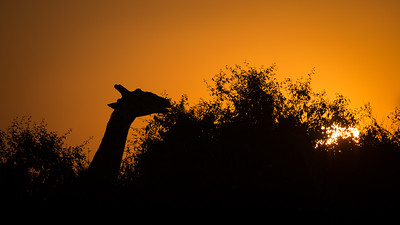"Sunset, Coucher de soleil, Girafe, giraffe : Giraffa camelopardalis - Location 18°33'13"" S 24°4'58"" E"