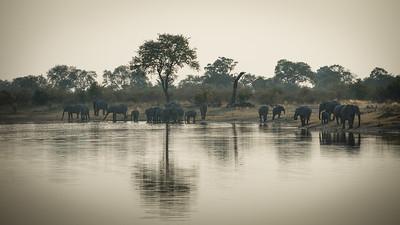"""African bush elephant : bush elephant : savannah elephant : Loxodonta africana, Éléphant de savane d'Afrique - Location 18°10'32"""" S 23°26'45"""" E"""