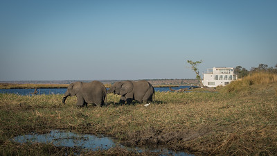 "Pride of Zambezi - Location 17°50'28"" S 25°3'50"" E"