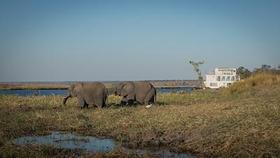 """Pride of Zambezi - Location 17°50'28"""" S 25°3'50"""" E"""