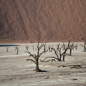 Deadvlei landscapes