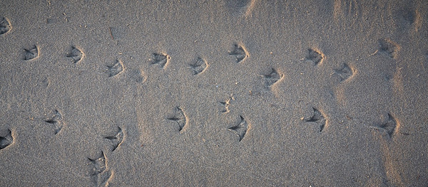 Track of bird