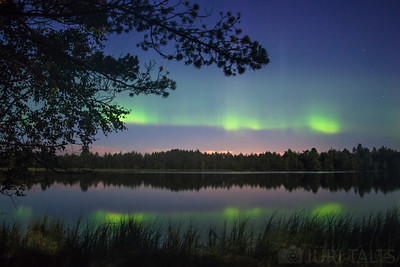 Northern lights in the bog