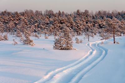 Winter in the Endla bog