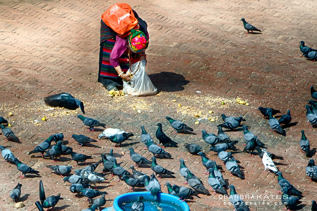 Feeding the Pigeons so they carry messages to the Gods, Boudhanath Stupa, Nepal