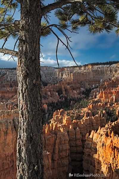 Pine and Pillars