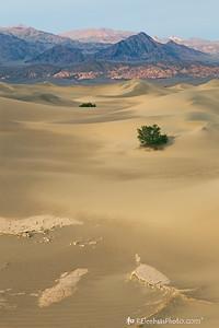Mesquite Flat Sand Dunes Sunset I