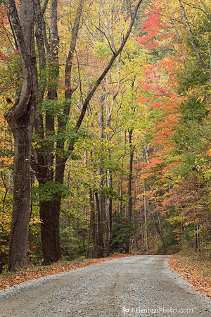 Colorful Country Lane