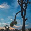 Joshua Tree Sunset II