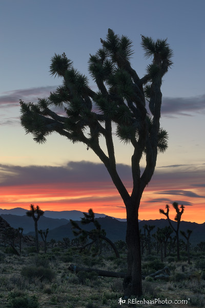 Joshua Tree Sunset VI