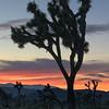 Joshua Tree Sunset VI