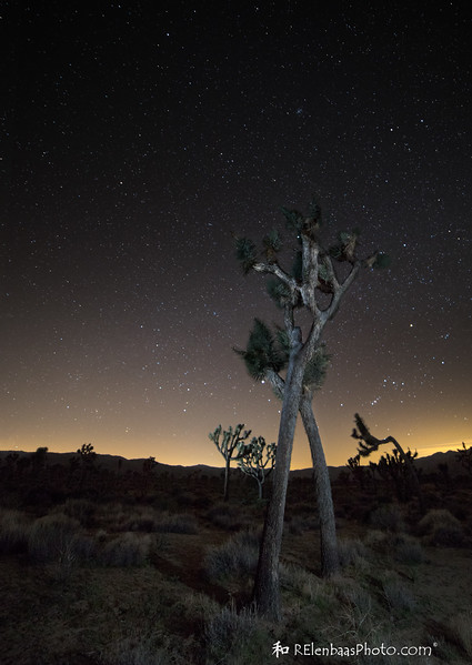 Joshua Tree Starry Night