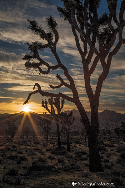 Joshua Tree Sunset I
