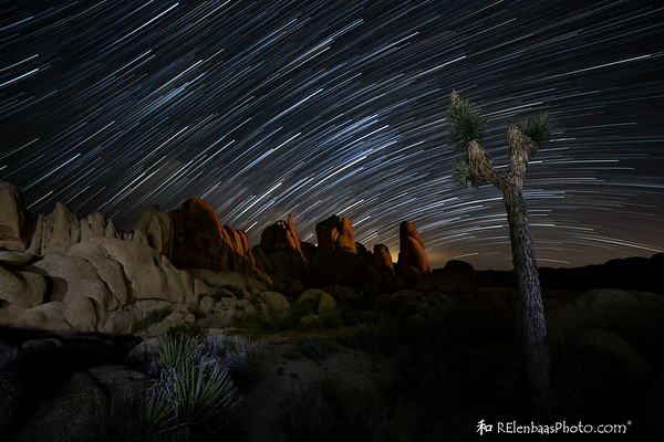 Joshua Tree Startrails II