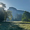 Cook's Meadow Sunburst