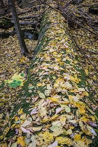 autumn2018-003