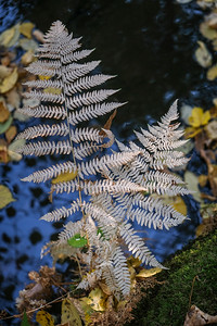 autumn2018-002