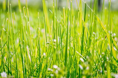 spring_15_028