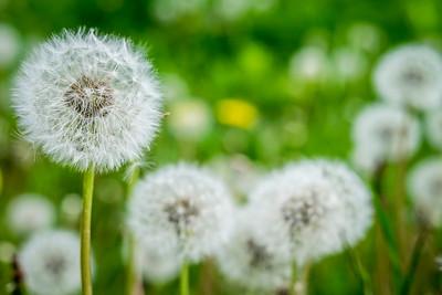 spring_15_026