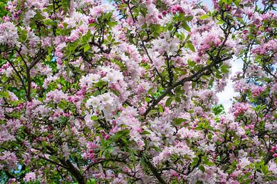 spring_15_022