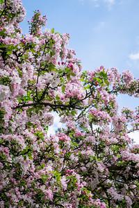 spring_15_021