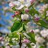 spring_15_020