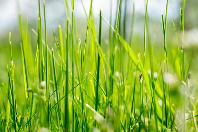 spring_15_027